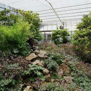 Invernaderos Centrales (5)